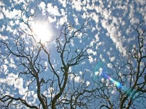 Árboles sin hojas y el cielo con pequeñas nubes