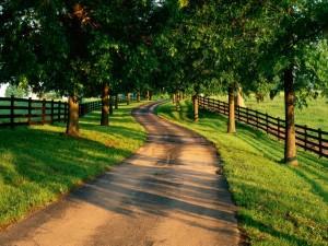 Postal: Pequeña carretera entre la sombra de los árboles