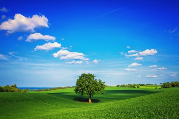 Árbol en un prado verde