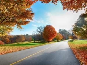 Árboles otoñales junto a la carretera