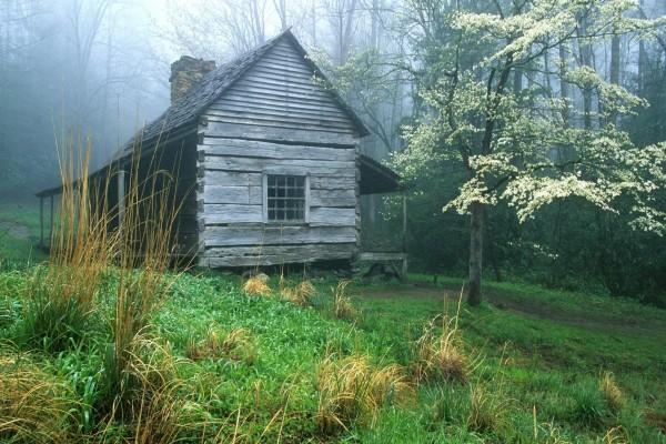 Una cabaña de madera en el bosque verde