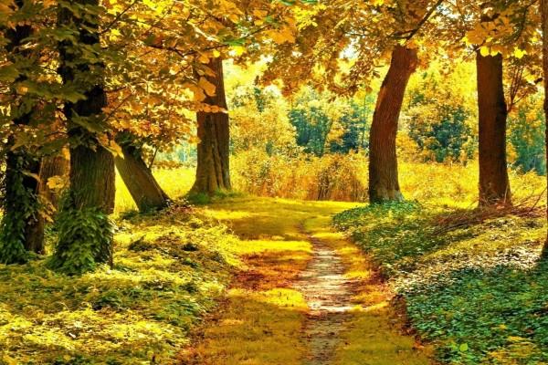 Camino amarillo entre árboles