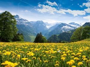 Flores amarillas y grandes montañas