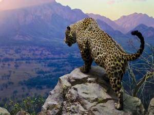 Jaguar en la roca