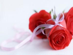 Lazo atado a una rosa roja