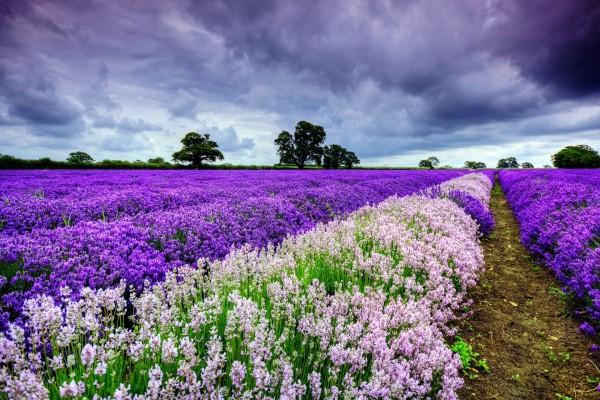 Color en el campo un día nublado