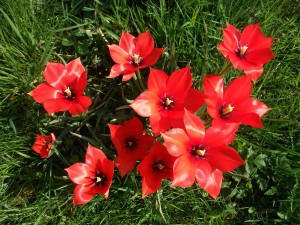 Bonitas flores rojas sobre la hierba