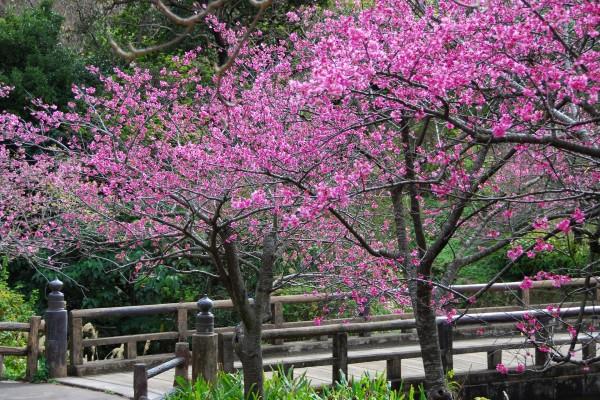 Árboles floreciendo junto al puente