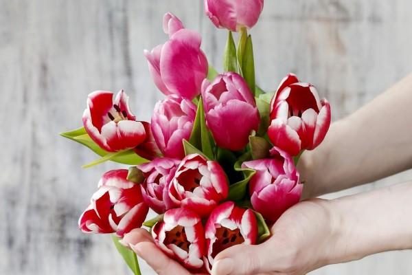 Te entrego estos tulipanes