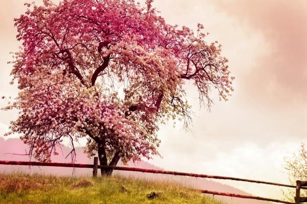 Árbol florecido en primavera
