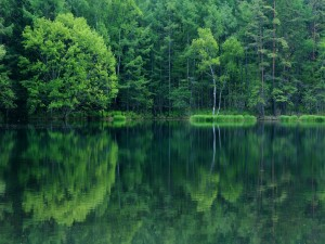 Postal: Bosque reflejado en el agua