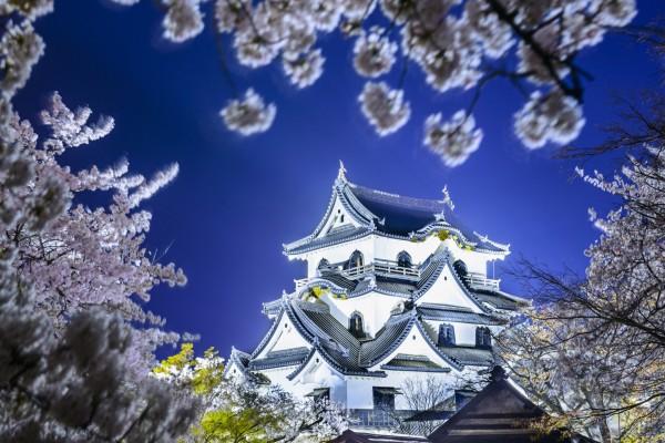 Castillo Hikone iluminado (Japón)