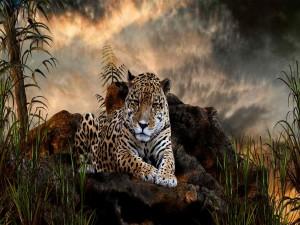 Postal: Un jaguar tumbado en las rocas