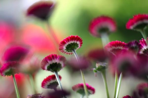 Los tallos de las flores
