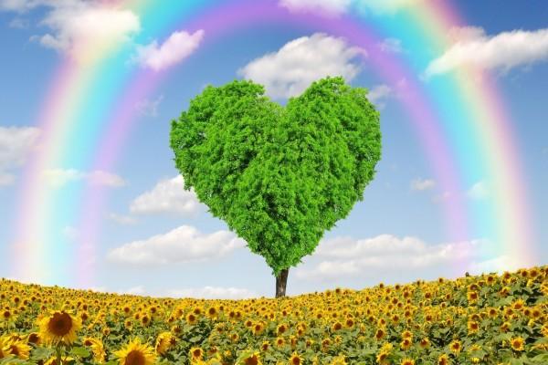 Un campo con girasoles, un arco iris y un árbol con forma de corazón