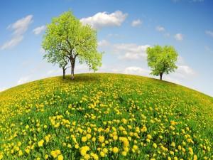 Postal: La primavera se hace presente