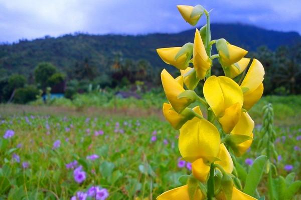 Elegante flor amarilla en la pradera