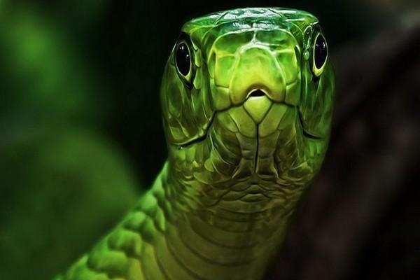 Cabeza verde de serpiente