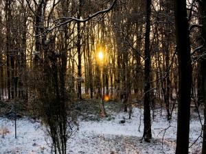 El sol entre los árboles una tarde de invierno