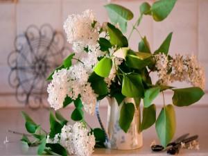 Lilas blancas en una jarra