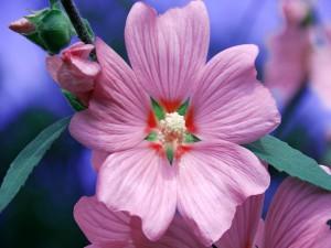 Flor con pétalos grandes de color rosa