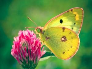 Mariposa en una curiosa flor