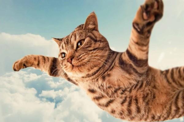 Gato volando entre las nubes