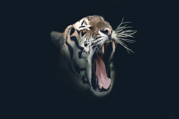 Tigre mostrando los dientes