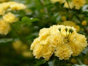 Postal: Grupo de flores en una rama
