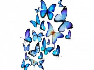 Mariposas azules en 3D