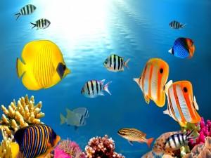 Postal: Peces en el fondo del océano