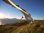 Un albatros aterrizando