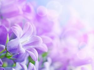 Bonitas flores de color violeta