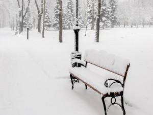 Postal: Parque cubierto de nieve