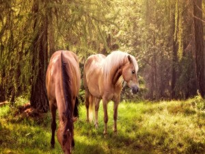 Dos caballos en el bosque