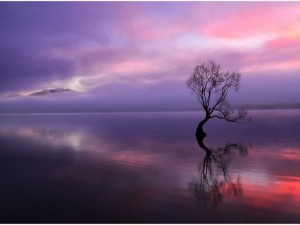 Árbol solitario reflejado en el lago