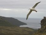 Un albatros volando en un precioso paisaje