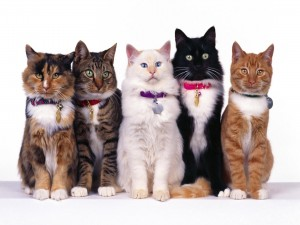 Postal: Gatos posando para la foto