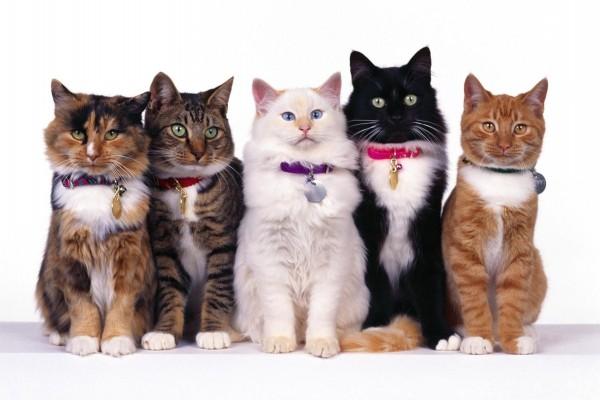 Gatos posando para la foto