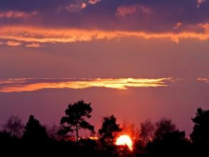 Postal: El sol entre los árboles al atardecer