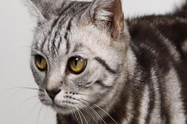 Los grandes ojos del gato