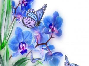 Postal: Mariposas entre las orquídeas