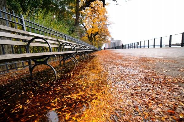 Paseo con hojas y agua en otoño
