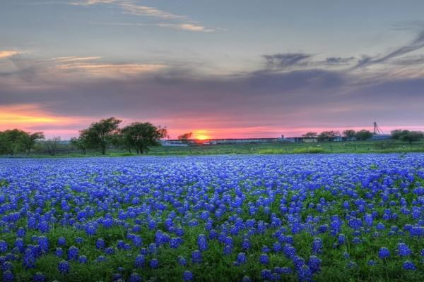 Tibios rayos de sol sobre un campo con flores azules