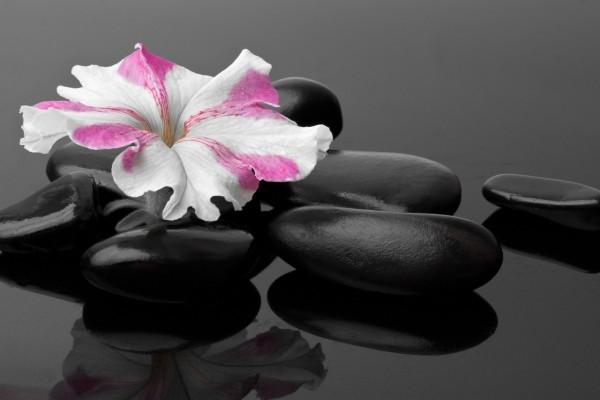 Una flor sobre las piedras negras
