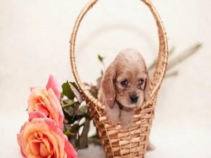 Postal: Perrito en una cesta junto a unas rosas