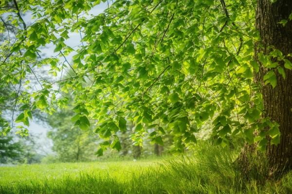 Naturaleza en primavera