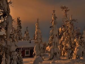 Casa y árboles cubiertos de nieve