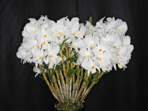 Postal: Orquídeas blancas en la planta