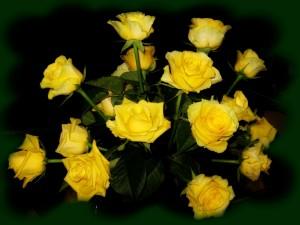 Postal: Bellas rosas amarillas
